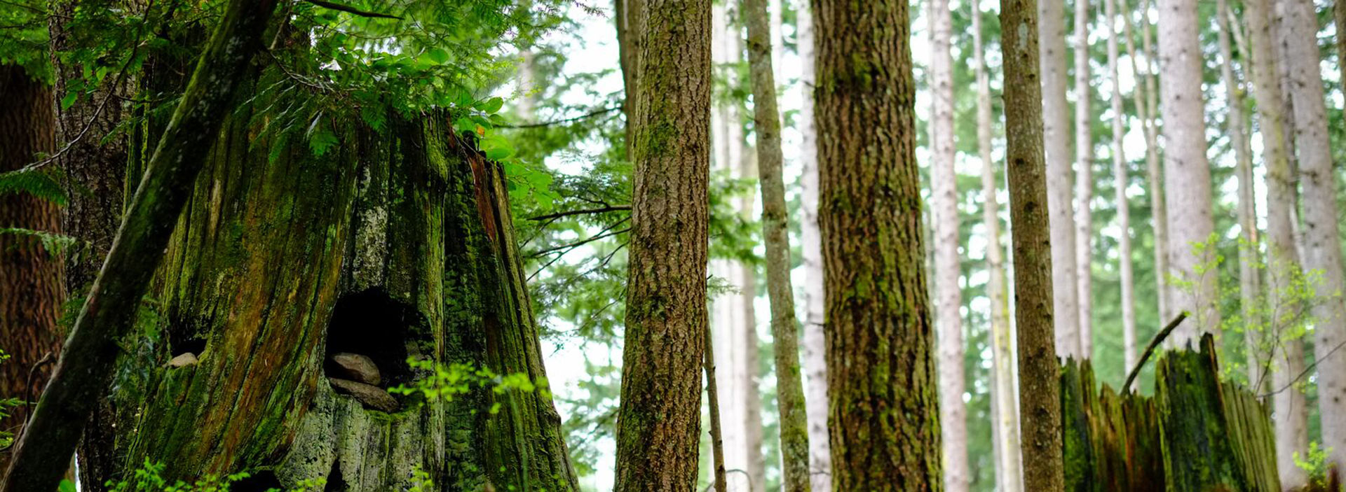 moss and plant covered tree trunk with a wooded background