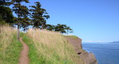 A trail running along a green grassy cliff side into trees above a blue ocean and under a blue sky