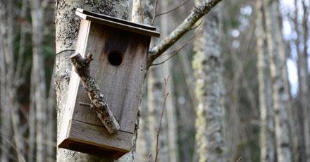 Birdhouse; Kristine.Mayes