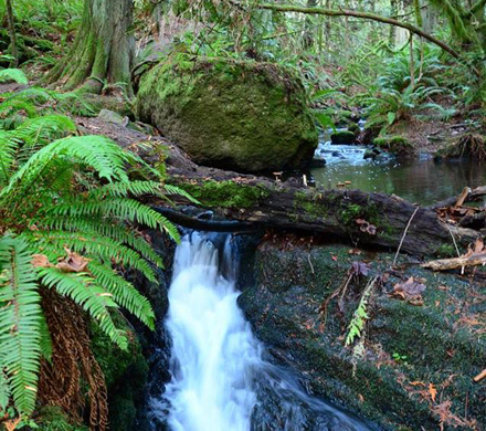 a creek waterfall among ferns and moss covered boulders and trees