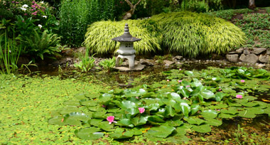 lily pad pond in a garden with a small clay birdhouse at the side of the water