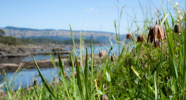 tall grasses on the hillside in the foreground with the ocean and hills of South Pender Island in the background