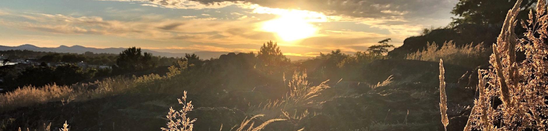 Sunset view of a grass swept hillside