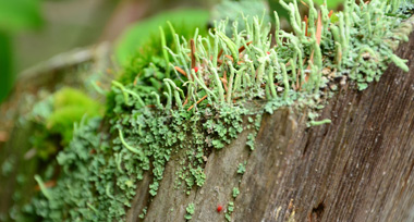 a close up of moss on a piece of wood