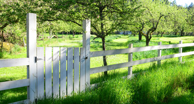 A white picket fence in an orchard of fruit trees under a bright sun