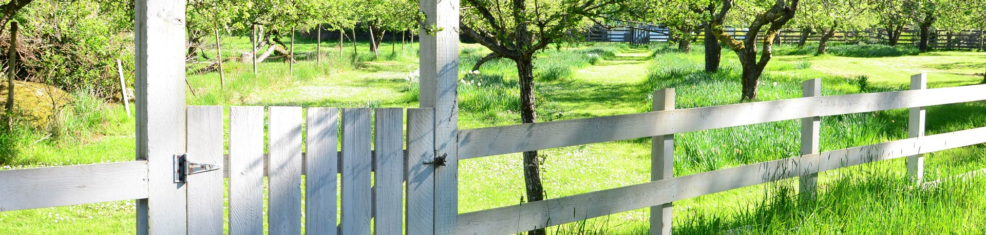 White picket fence with gate leading into a green orchard of trees