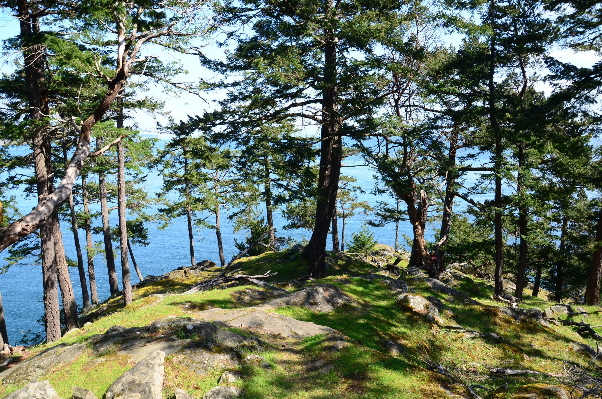 Trees on a mossy rock cliff over an ocean in the sunshine
