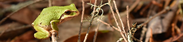 Small green tree frog perched on a branch