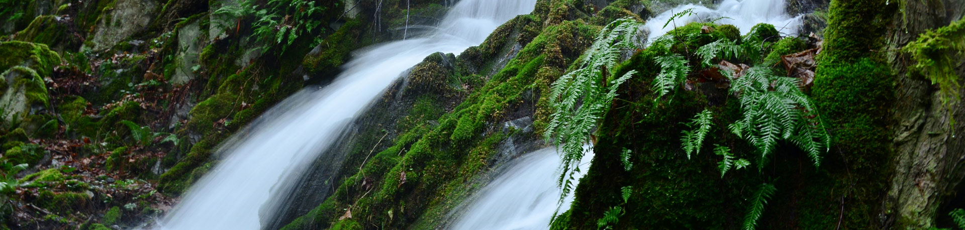 Waterfall down a mossy green cliff with ferns