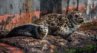 Seals laying on a rock