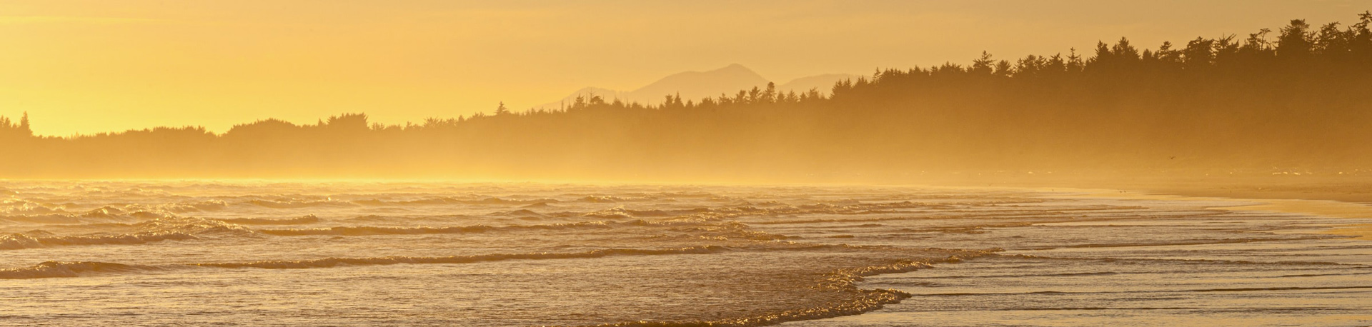 outgoing tide on a sandy stretch of beach bathed in golden sunlight with the shadow of forests in the background