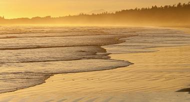 an outgoing tide on a coastline under golden sunlight