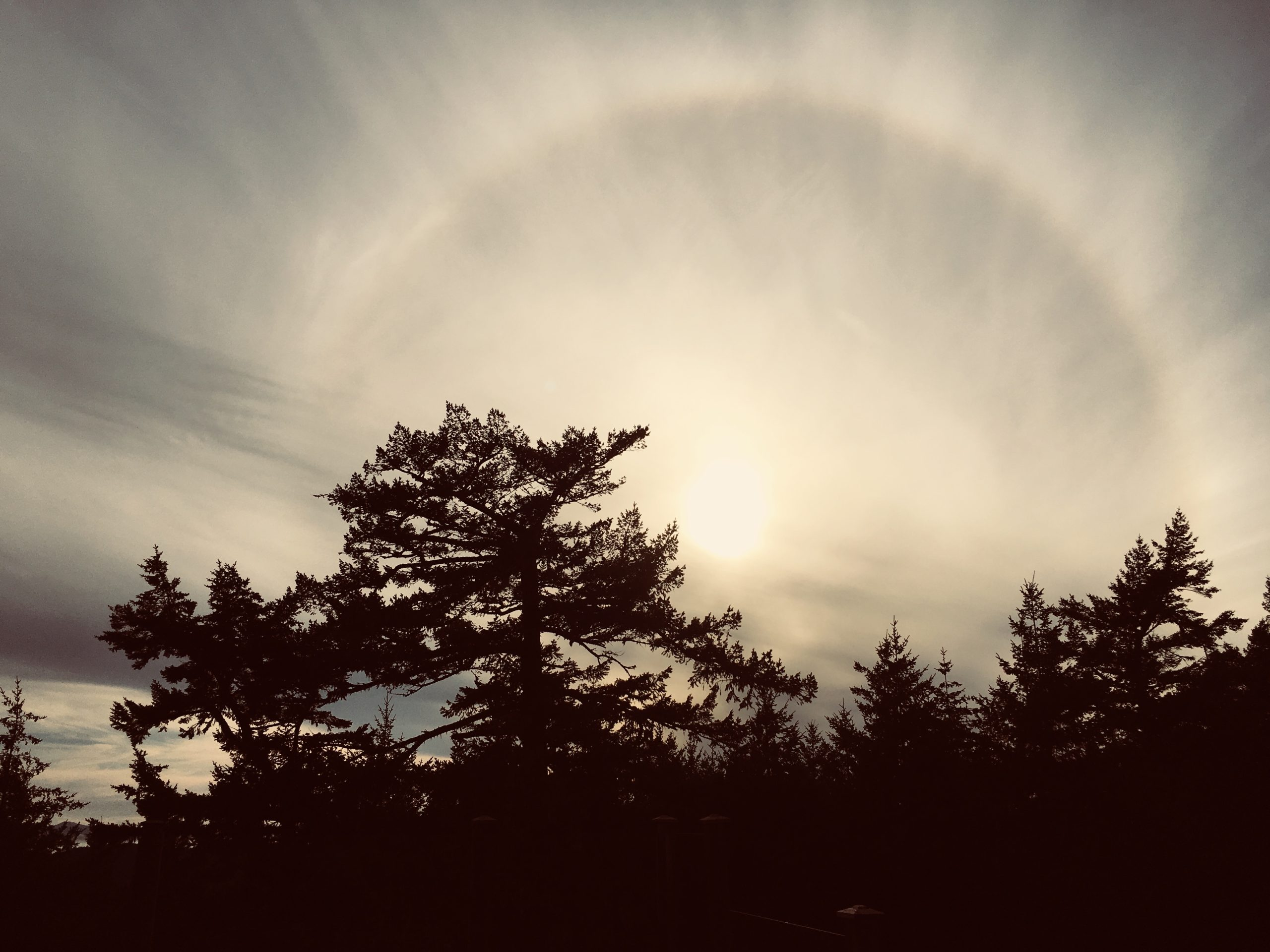 sun halo in the sky rising up above a shadowed forest of trees