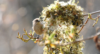 a small bird perched beside a larger multicoloured nest on a tree branch.
