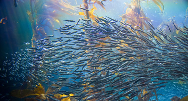 A swarm of silver fish swim in rainbow coloured waters with sunlight above