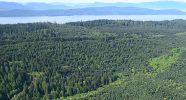 a blanket of dark green and lime green trees and fauna on Galiano Island