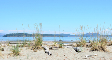 pristine beach with wild grasses and driftwood the blue ocean and outline of islands in the background