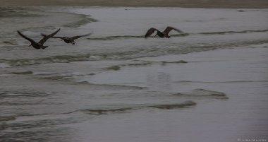 Three seagulls flying near the shore of a beach