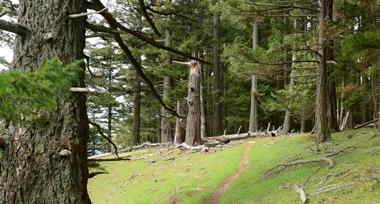 hillside trail between trees on Saturna Island