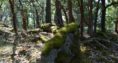 rocky outcrop covered in moss in the woods of Thetis Island
