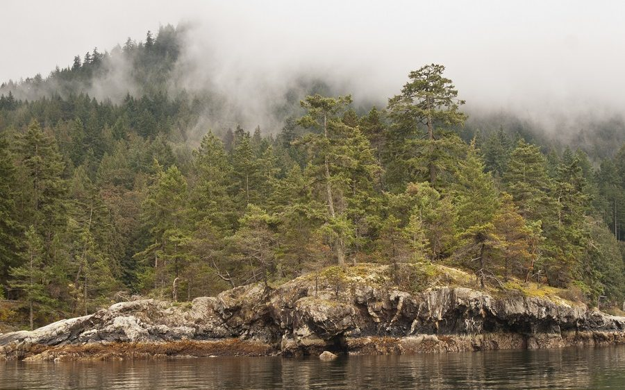 coastal bluff of rock face to the water, surrounded in trees and fog