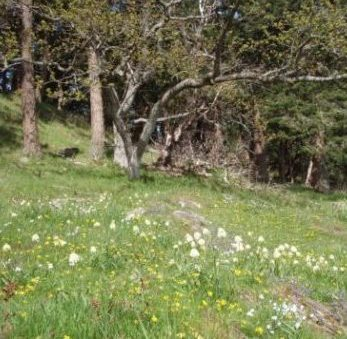 Beautiful flowering. hillside with green grass and trees in the background